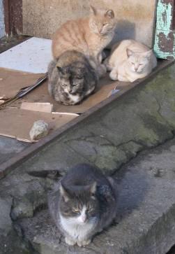 Secret-live-of-street-cats-of-Riga-5755e0a9da719-jpeg__880