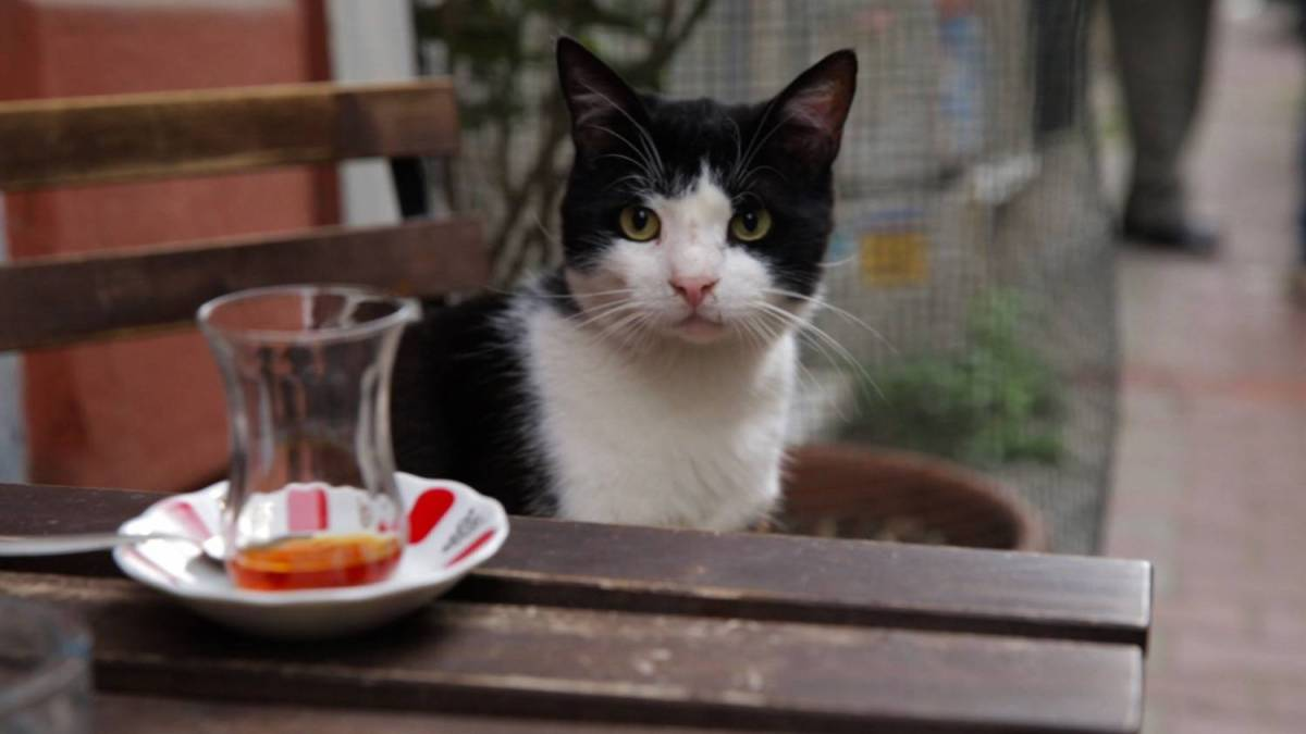 KEDi - A magical and remarkable documentary of the Street Cats of Istanbul