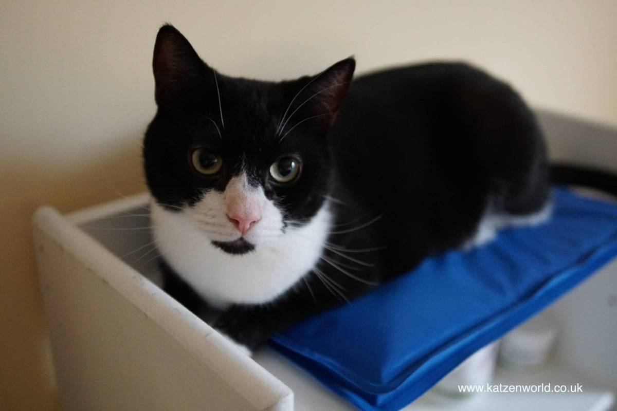 Oliver & Nubia: Cooling mats just for dogs? Us cats disagree!