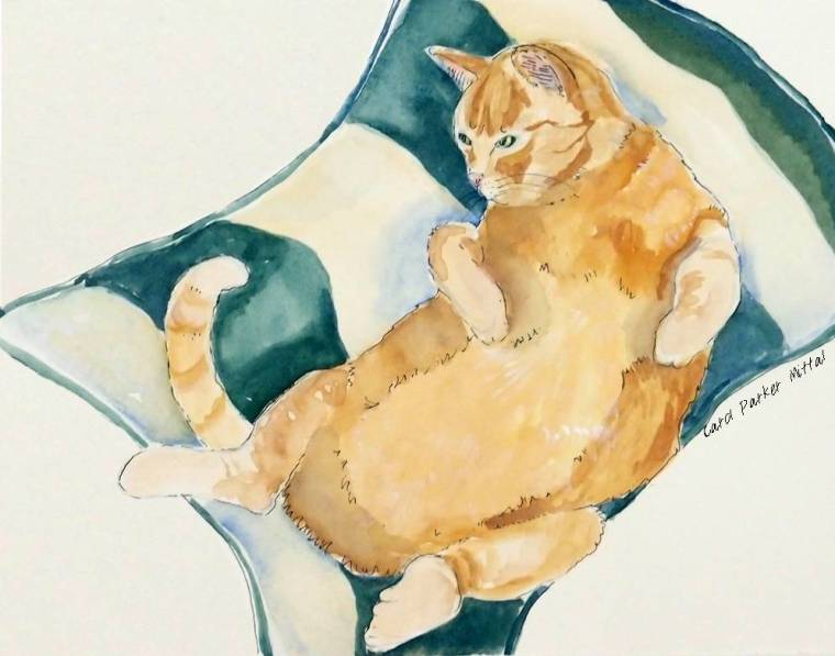 Yellow Tummy Cat; watercolor by Carol Parker Mittal