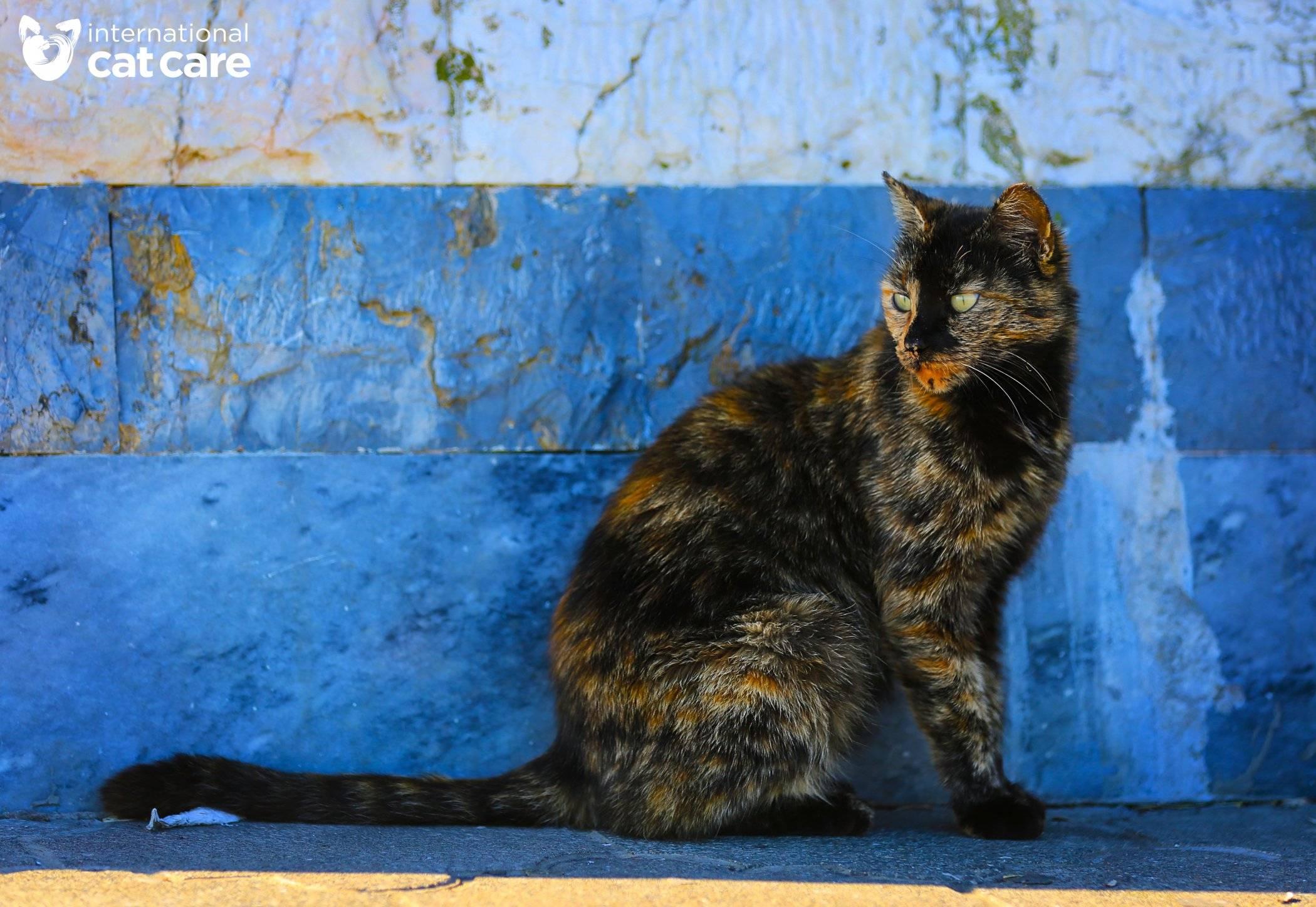Street Cats Winner – Seyed Mohammad Fallah Firouzkouhi