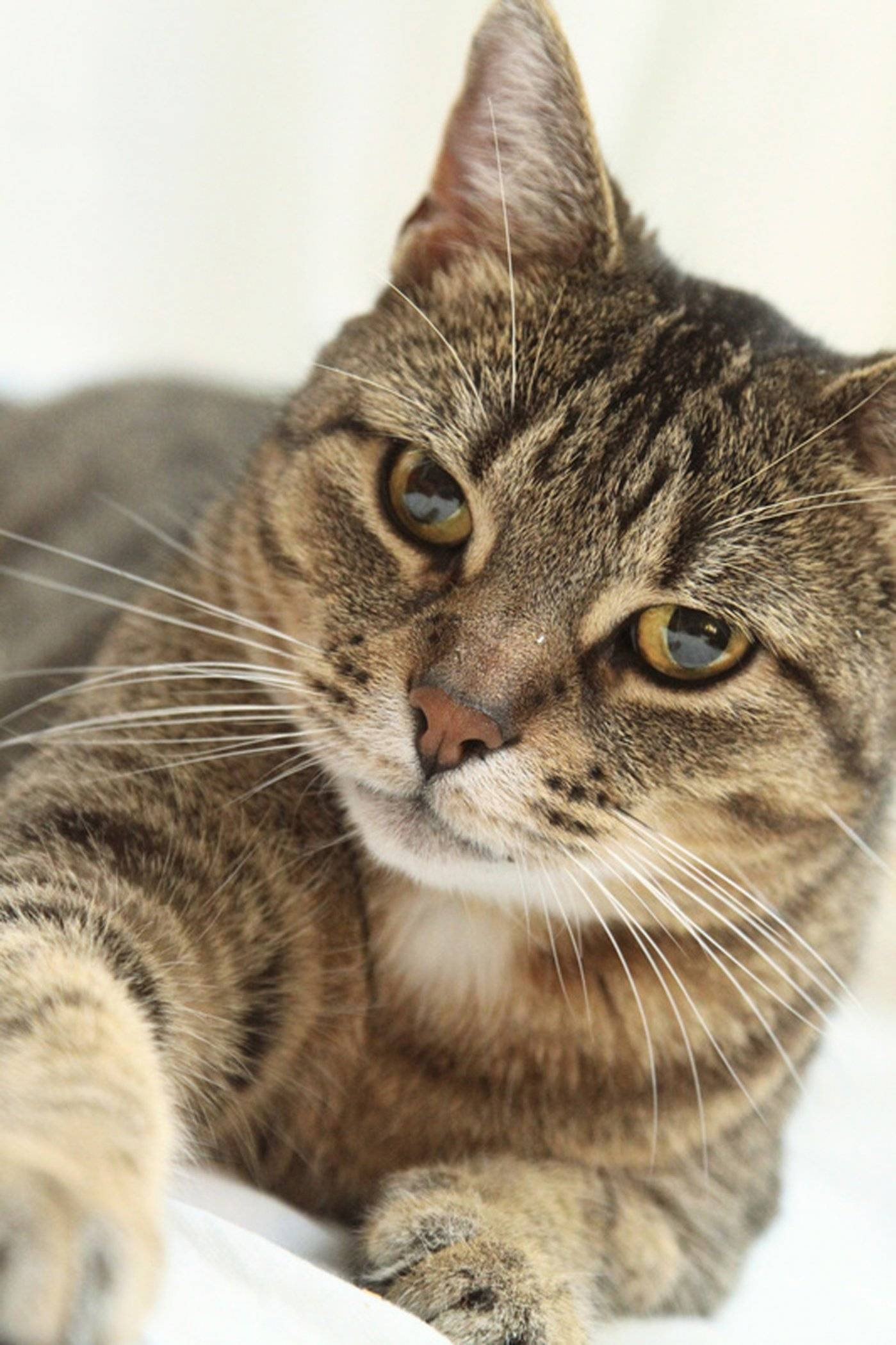 Ultimate Guide to Understanding Pet Insurance for Your Cat ...
