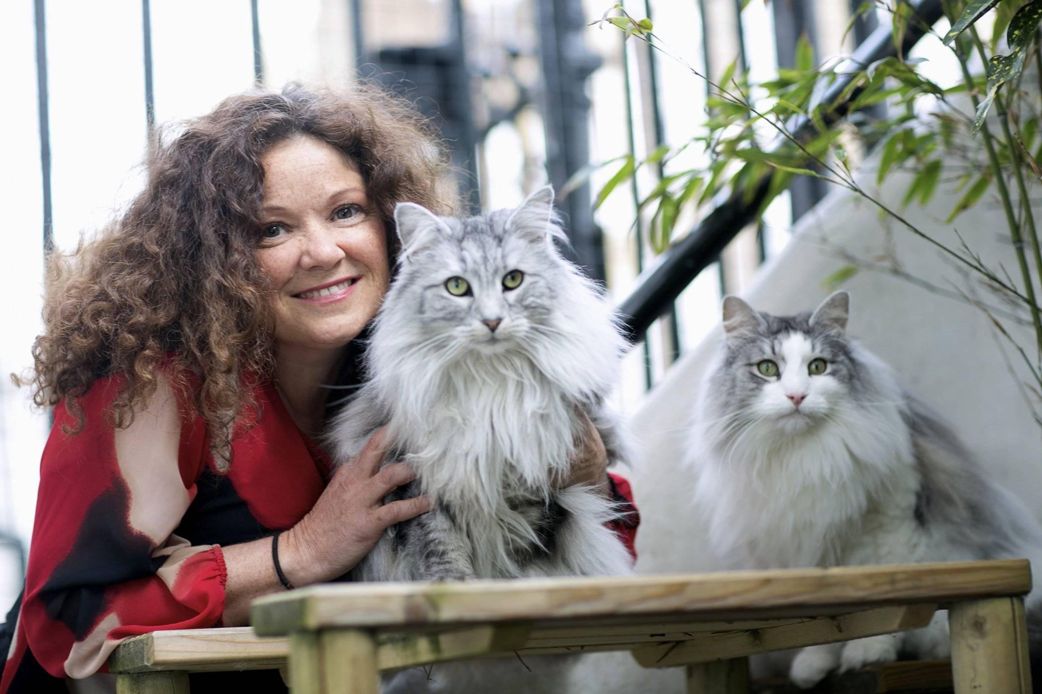indoor cat behavior advice for parents