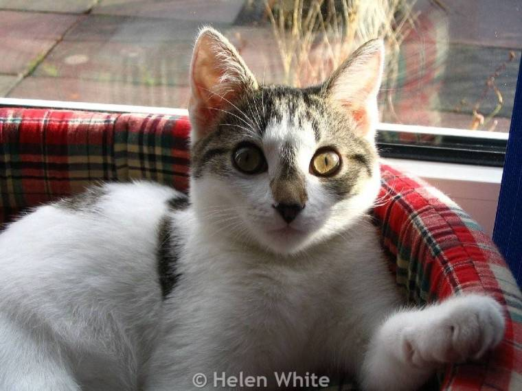 Bobby as a kitten in her basket.