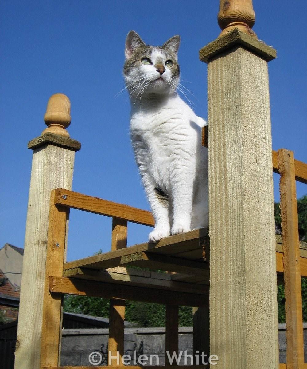 Bobby on garden climber.
