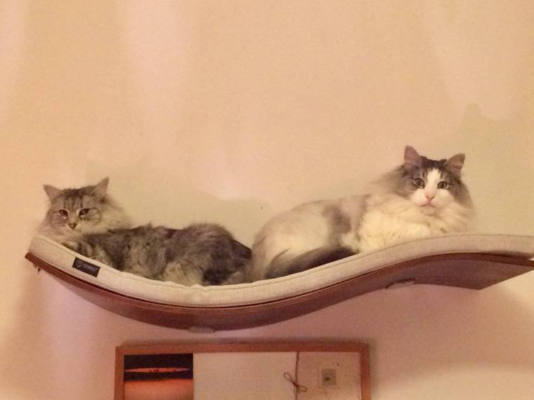 review of Cosy and Dozy chill deluxe cat wall shelf