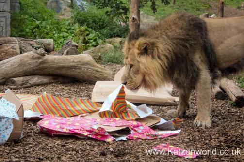Katzenworld Lion Cubs0004