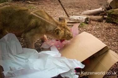Katzenworld Lion Cubs0008