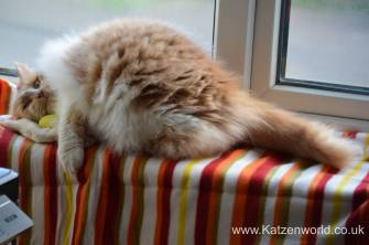 Katzenworld Louise story0001
