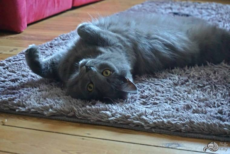 Yoda rug | Fluffy Kitty