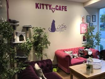 KittyCafeNottingham-10