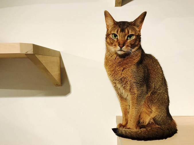 Nag_CatsGallery_15