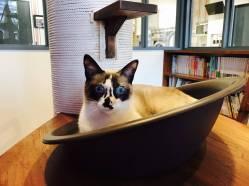 Nag_CatsGallery_24