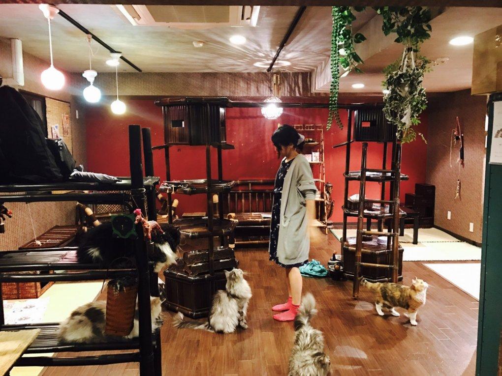 Osaka_Gurugurudo-11