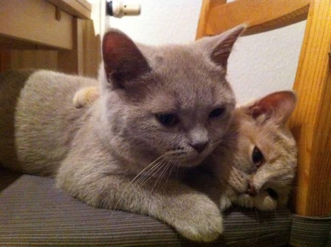 Ewa und Merlin Babys