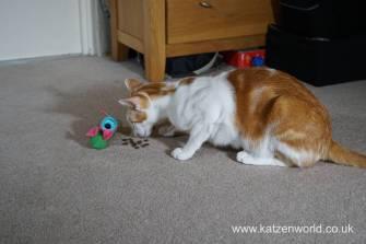 Katzenworld bowless feeder0009
