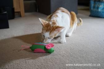 Katzenworld bowless feeder0014