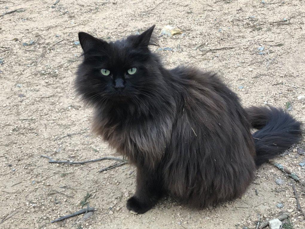 Goathouse Refuge Black Cat