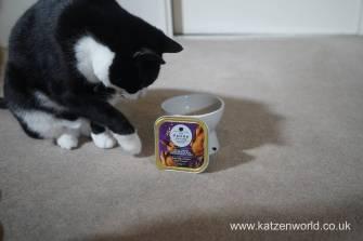 Feline Cuisine Katzenworld0008