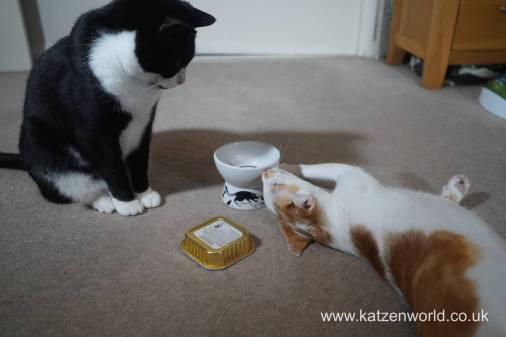 Feline Cuisine Katzenworld0016