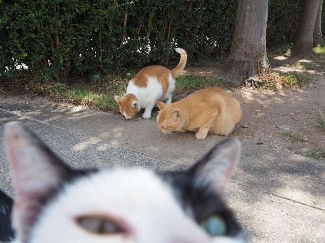 Katzenworld Holy Cats