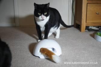 foxden Katzenworld0012