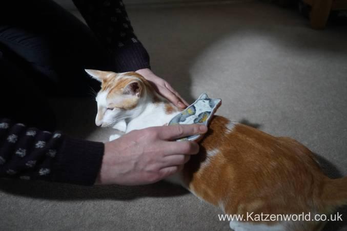 Katzenworld Monmoncats brush0003