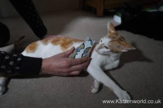 Katzenworld Monmoncats brush0004
