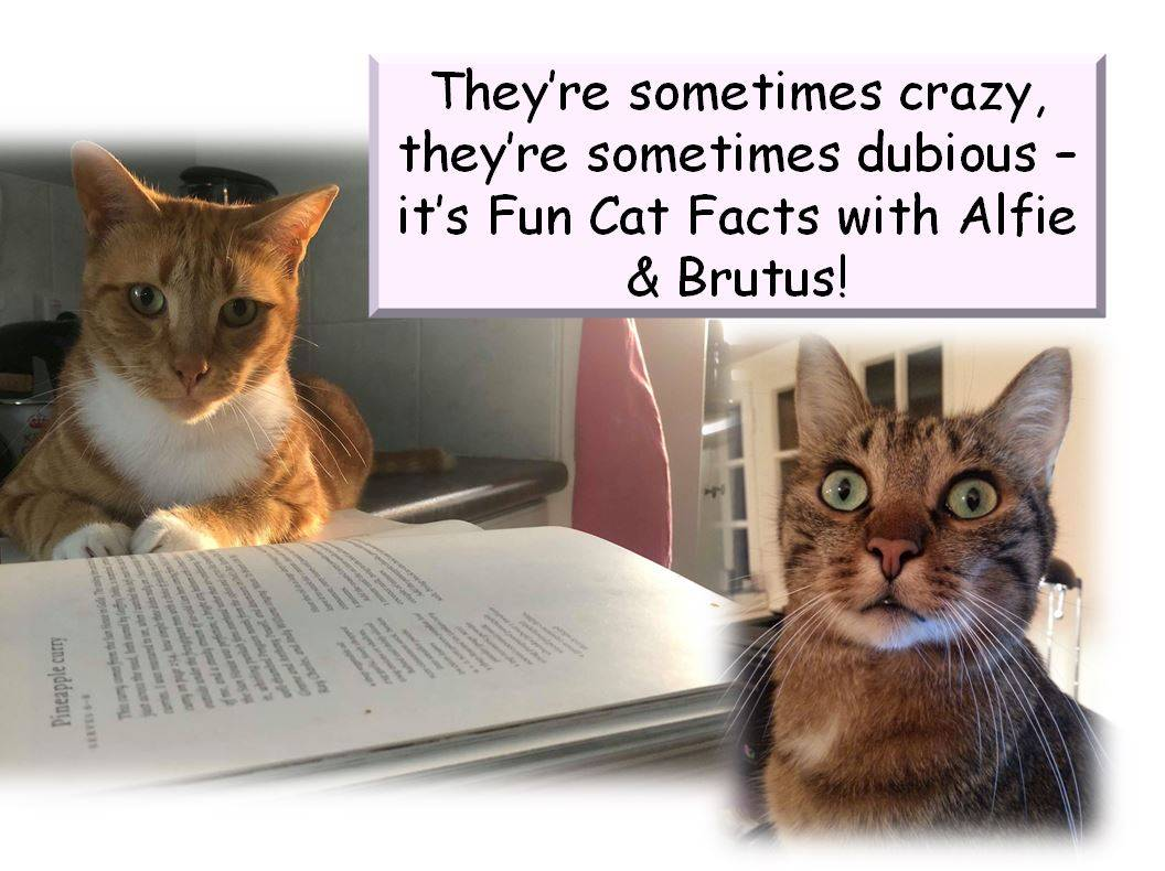 Fun Facts with Alfie & Brutus: The First Cat