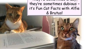 Fun Facts with Alfie & Brutus: Cat Glands!