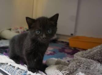 Royal kitten, Kate, abandoned in box