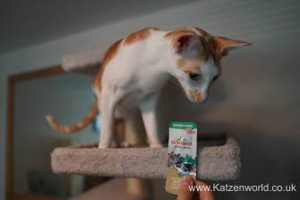 Katzenworld Almo Nature Snack0001