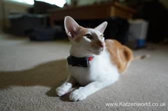 Katzenworld PetPointer0012