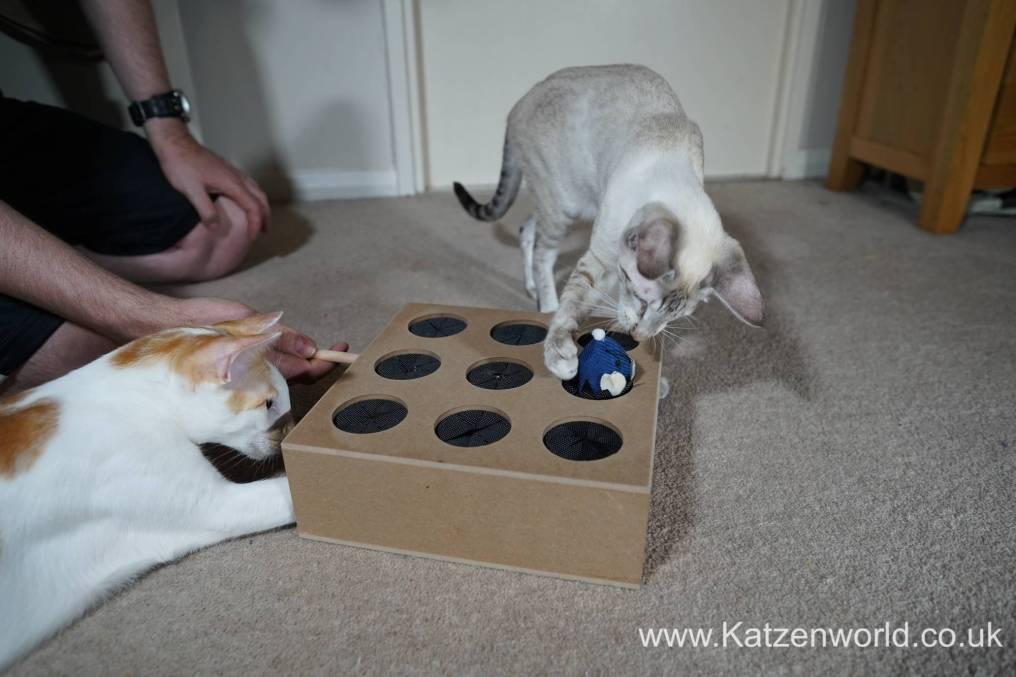 Katzenworld Whack-a-Mouse0007