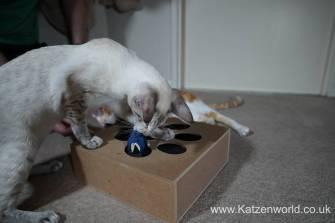 Katzenworld Whack-a-Mouse0009