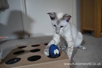 Katzenworld Whack-a-Mouse0015