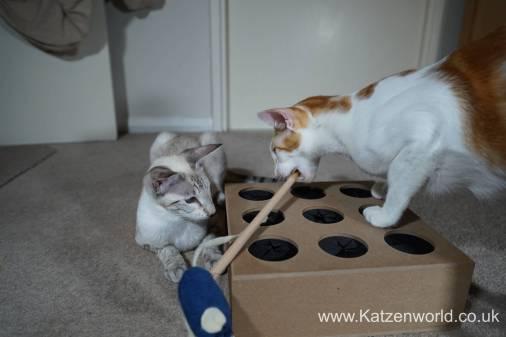 Katzenworld Whack-a-Mouse0020