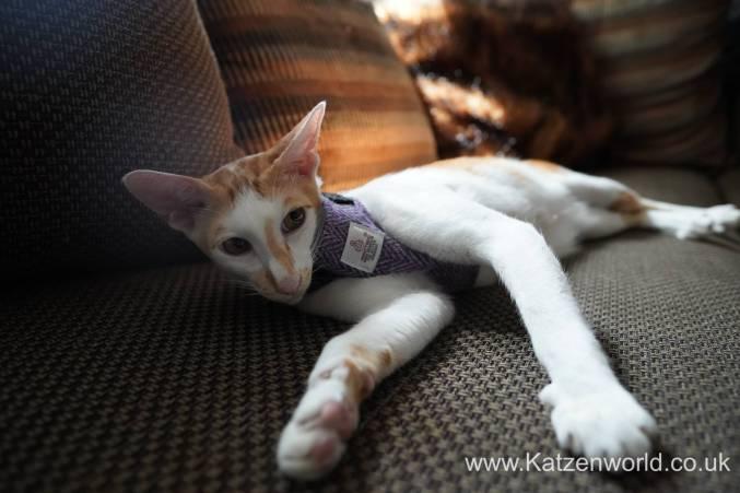 Katzenworld equi-stitch cat harness0002