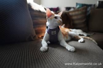 Katzenworld equi-stitch cat harness0005