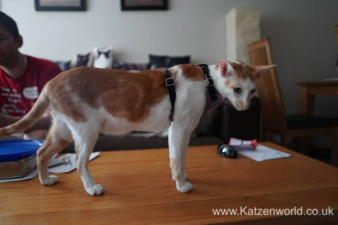 Katzenworld equi-stitch cat harness0010