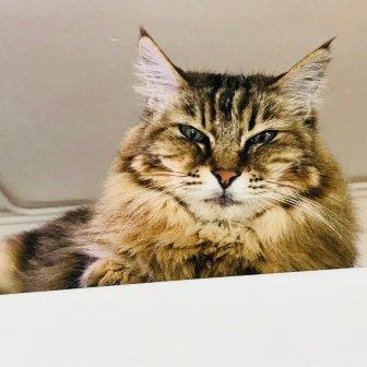 The Cats Tea Room-18