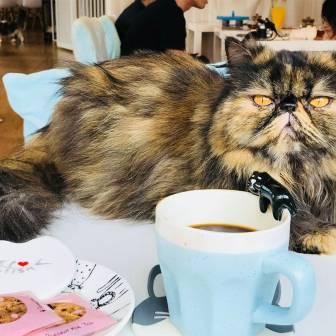 The Cats Tea Room-60