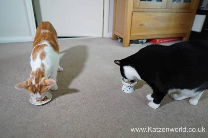 Katzenworld webbox cat treats0018