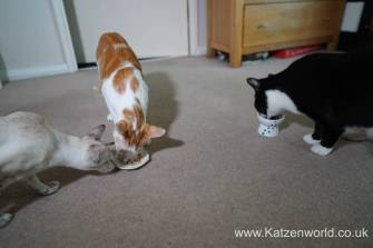 Katzenworld webbox cat treats0020