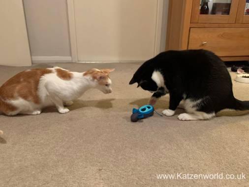 Katzenworld Doc and Phoebe0006