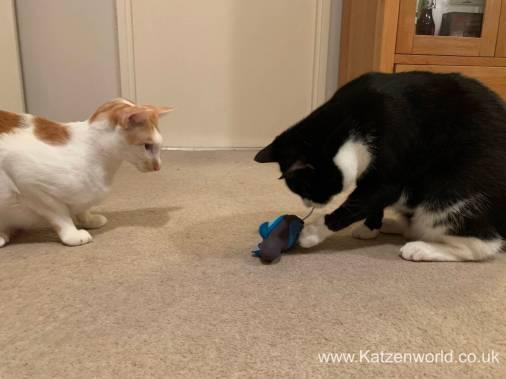 Katzenworld Doc and Phoebe0007