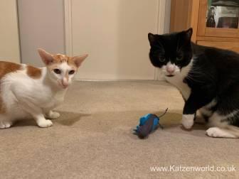 Katzenworld Doc and Phoebe0009