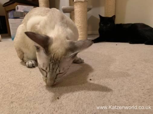 Katzenworld Doc and Phoebe0012