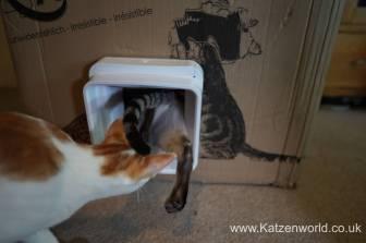 Katzenworld SureFlap0031