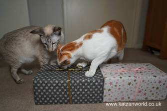 Katzenworld Christmas Stories0029